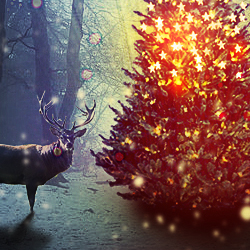 Magic Christmas Tree Photoshop Manipulation Tutorial psd-dude.com Tutorials