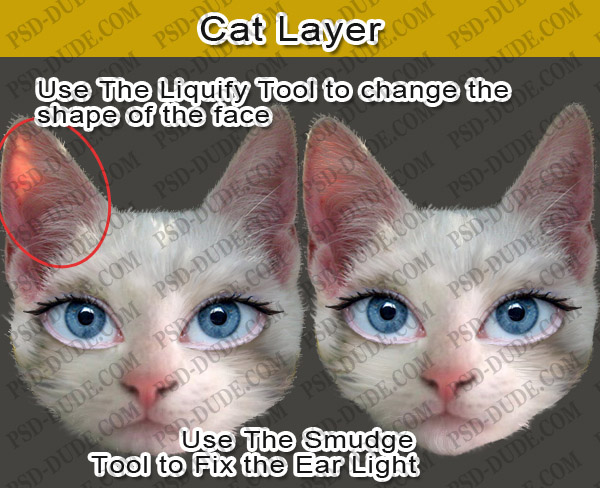 Photoshop Cat Face Called Cat Face Layer