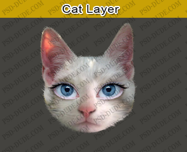Photoshop Cat Face Adjust The Cat Face in The