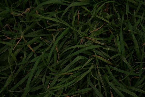 grass by toddsmithsalter photoshop resource collected by psd-dude.com from flickr