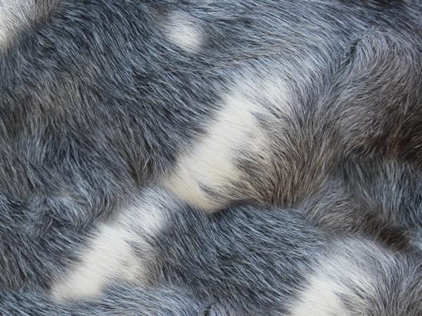 Animal Gray Fur Texture