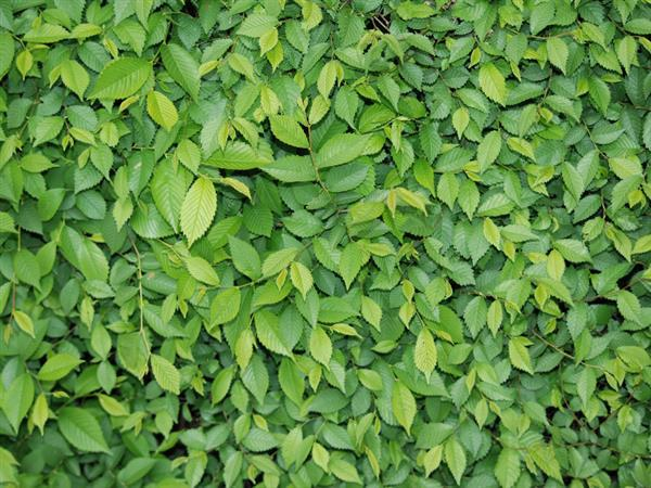 Green leaf foliage texture