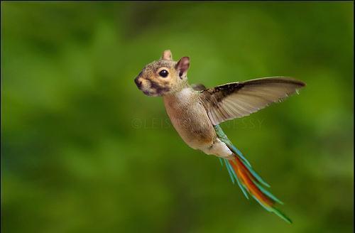Animal Morph Photoshop...