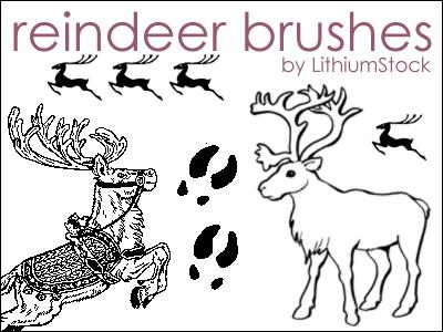 Reindeer