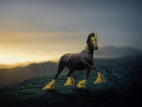 Black and Gold Horse Morphing in  Photoshop