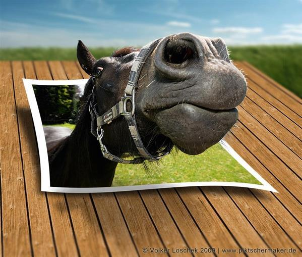 Pop Up Horse Photo Efect