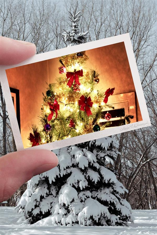 Christmas for a Pine Tree by nadda1984 photoshop resource collected by psd-dude.com from deviantart
