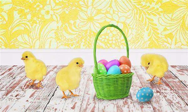Easter baby chicks and Painted eggs Background