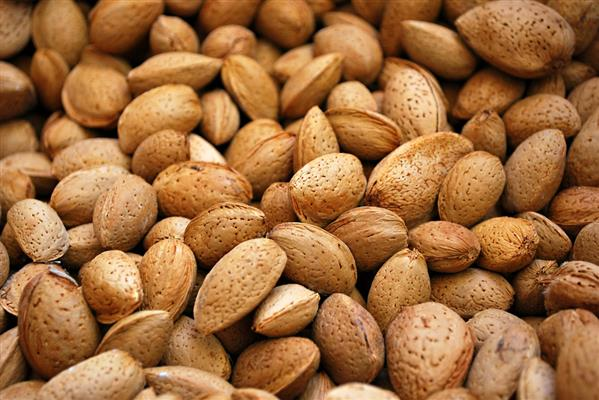 Almond texture by ljmilica photoshop resource collected by psd-dude.com from deviantart