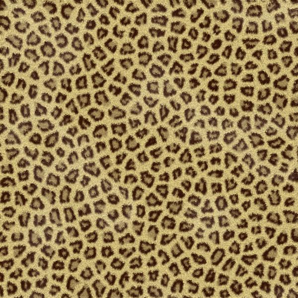 Animal Print Fur Stock Texture