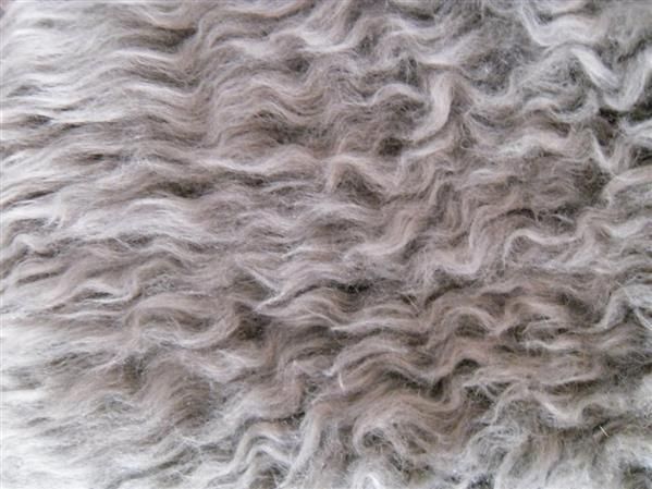 Curly Fur Wool Texture
