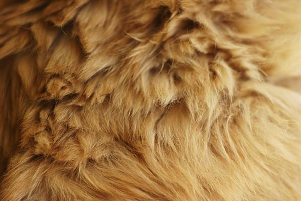 Fuzzy Cat Fur Texture