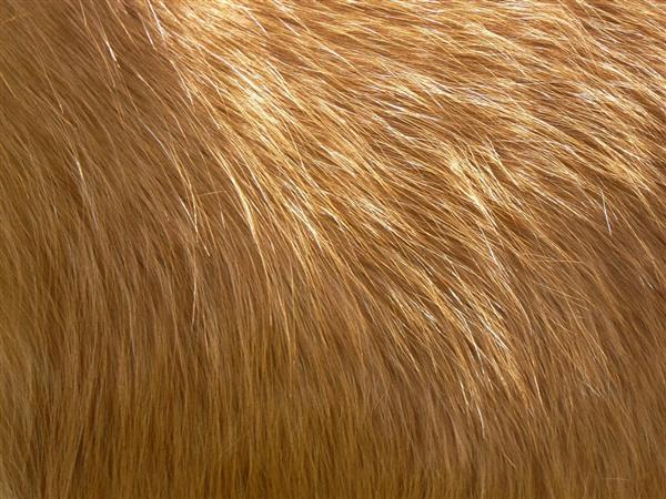 Horse long winter fur texture