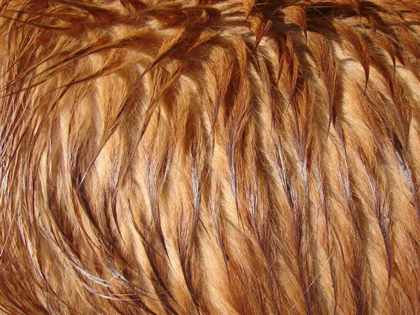 Long Wet Dog Fur Texture Image