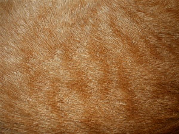 Orange Cat Fur Texture