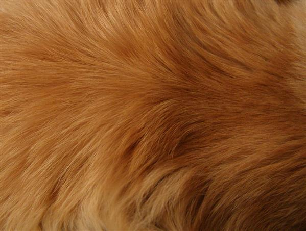 Orange Fur texture II