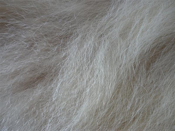 Polar Bear Fur Texture