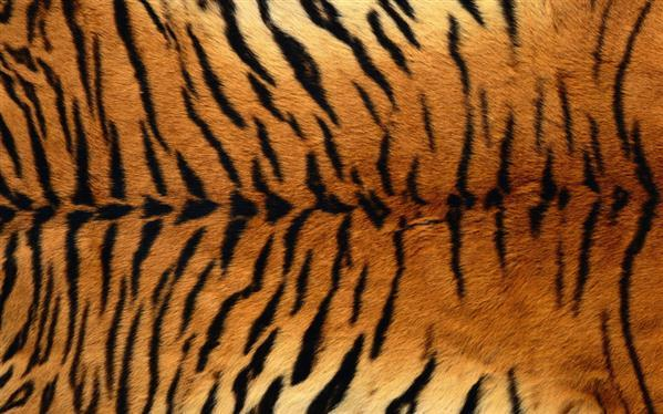 Tiger Fur Texture Background Free