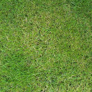 40 Grass Texture With High Res Quality | PSDDude