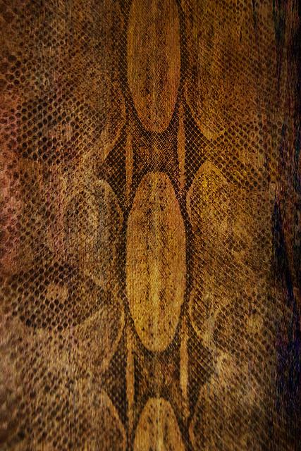 snake by alicepopkorn photoshop resource collected by psd-dude.com from flickr
