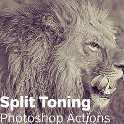 Split Tone Effect Photoshop Free Action psd-dude.com Resources