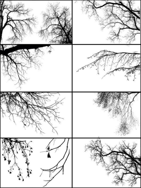 Tree