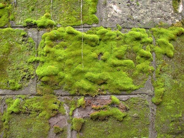 Spanish Moss Photoshop & GIMP Brushes | Obsidian Dawn