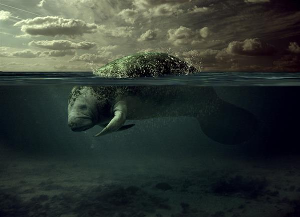 Manatee Underwater Matte Painting Photoshop