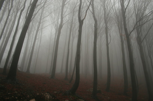 Creepy forest background with fog.