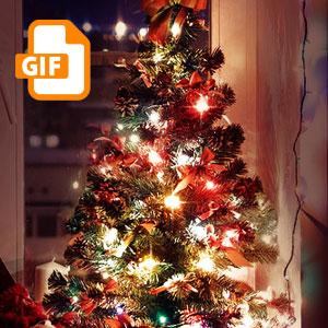 Christmas Lights Animated GIF