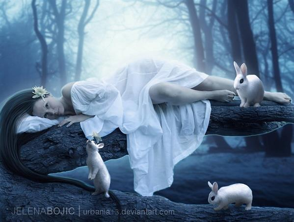 Purity White Rabbits Magic Forest