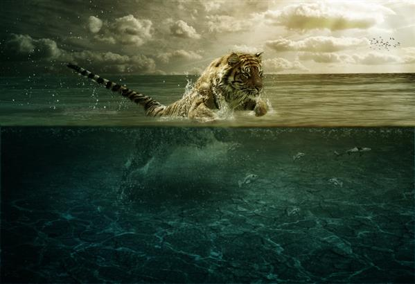 Tiger Leap in the Water Photoshop Manipulation