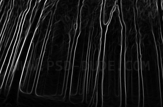 Spooky forrest trees contour made with Photoshop